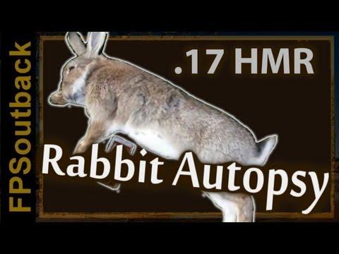 .17 HMR Rabbit Hunting Autopsy (Censored)