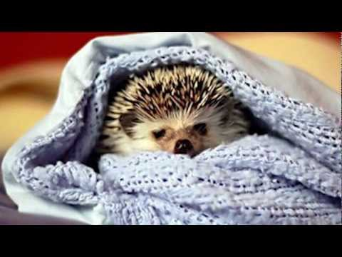 Hedgehogs vs. Politicians :: You Decide