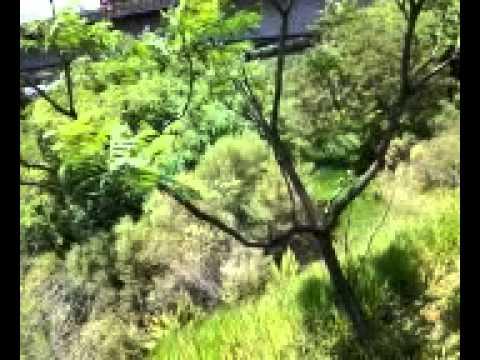 SUPOSTO Gato selvagem atropelado Margem Rodovia entrada para Osasco prox Rio tietê Osasco nov2014