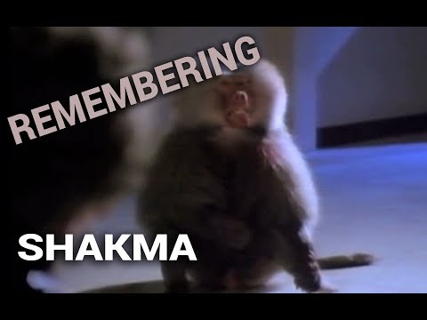 Remembering: Shakma (1990)