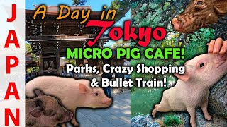 Mini Pig Cafe | Toyko in a Day | Travel Guide Japan