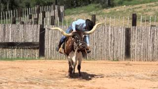 TEXAS LONGHORN STEER BROKE TO RIDE • FOR SALE!