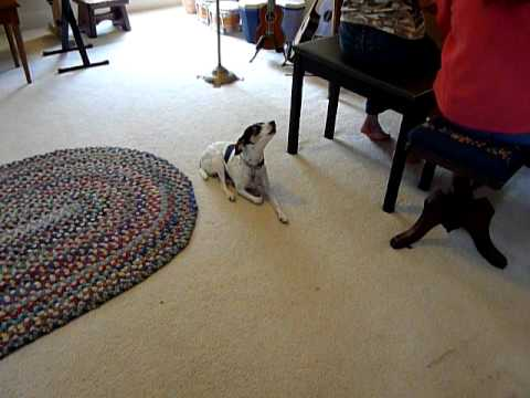 Gypsy Attends Music Lesson