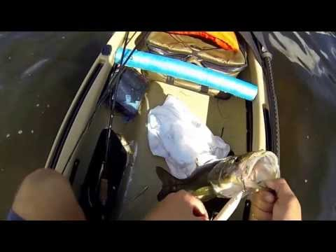 Top water snook fishing in Bradenton Fl