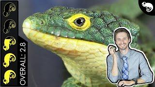 Abronia Arboreal Alligator Lizard, The Best Pet Lizard?