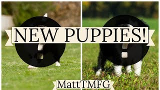 NEW PUPPIES Vlog #1 ft. ZNTVlogs