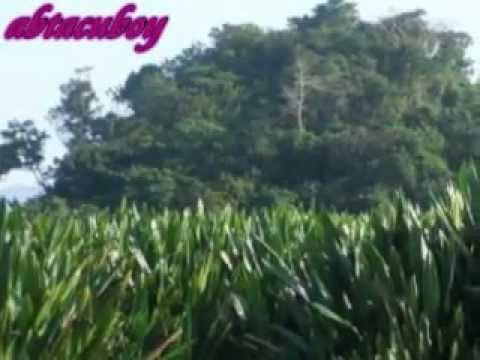 Cha-cha Medley - Ilocano Song video