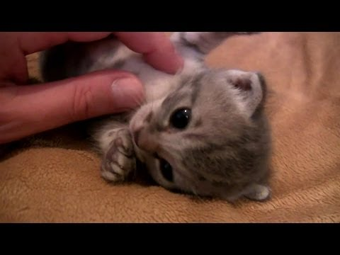 Adorable Baby Kittens, Day 17. Cutest Video Ever!