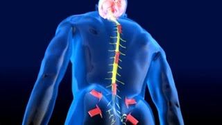 Sanjeevani Tips | Spinal Cord Pain |