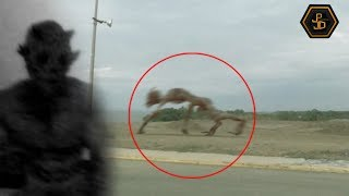 Top 5 Mysterious Creatures Caught on Camera 2019