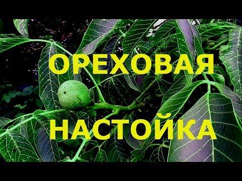 Ореховая настойка Настойка зеленые орехи +мед Супер настойка