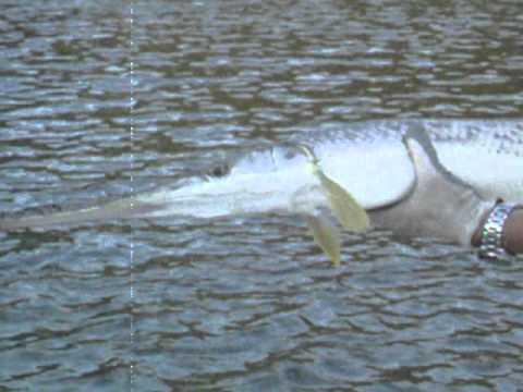 Gar patrol youtube for Lake allatoona fishing