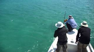 sawfish battle Islamorada 2
