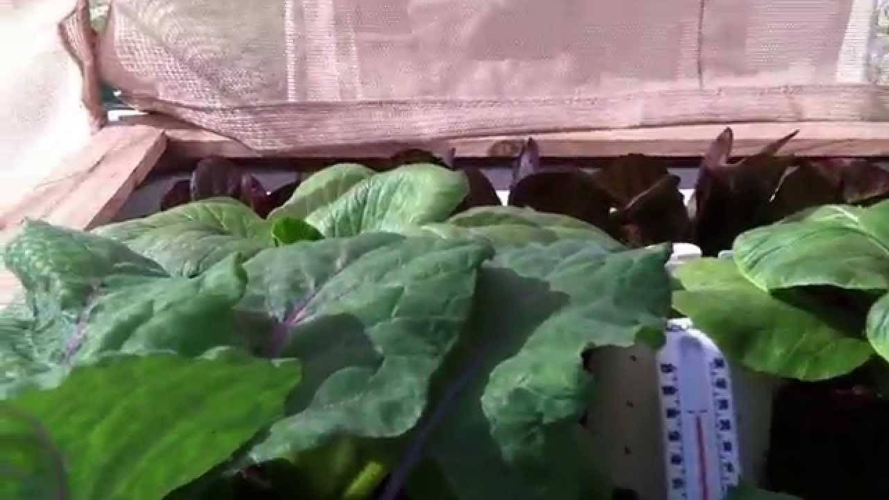 Phoenix arizona aquaponics 2 week update october youtube for Arizona aquaponics