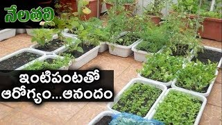 ఇంటి పంటతోనే ఆరోగ్యం...ఆనందం - Terrace Garden - Nelatalli - hmtv - netivaarthalu.com