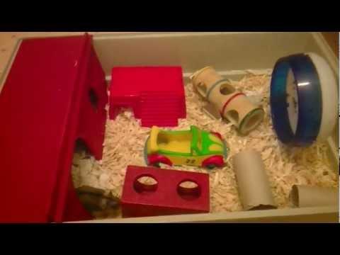 hamster erotik skyline models