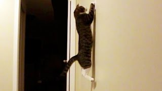 Well Trained Cat Turns Off The Light