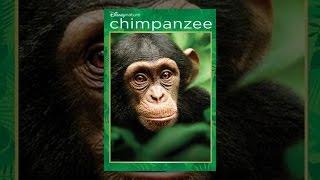 Chimpanzee - Chimpanzee