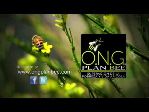 Ong Plan Bee.mp4 video