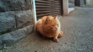 Who Knows about Persian Cats? / کسی از گربه های ایرانی خبر دارد؟