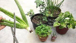 Natural fertilizer from aloe vera   Fertilizer for any plants   Organic fertilizer
