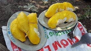 Việt-Hàn Couple |Tập 11| Thử ăn trái Sầu Riêng 5kg , ăn vỏ luôn coi sao????