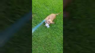 Death of a Dog Toy