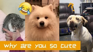 Funny And Cute Animals in Chinese Vines Compilation 2018 part 42 VERY FUNNY ANIMALS 可爱动物视频