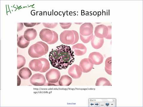 Leukocyte Overview.wmv