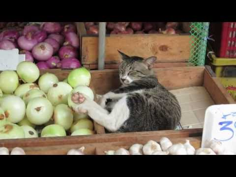 Cool Cat sleeping in the vegetables at the Khlong Toey Market BKK