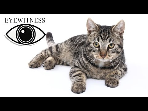 EYEWITNESS | Cat | S1E3