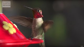Hummingbirds in Slow Motion - Earth Unplugged