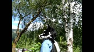 Lakeside Furs 2011 Trailer