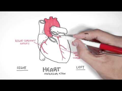 Cardiology - Coronary Blood Supply