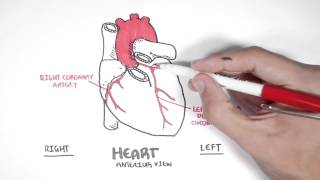 Cardiology - Coronary Blood Supply