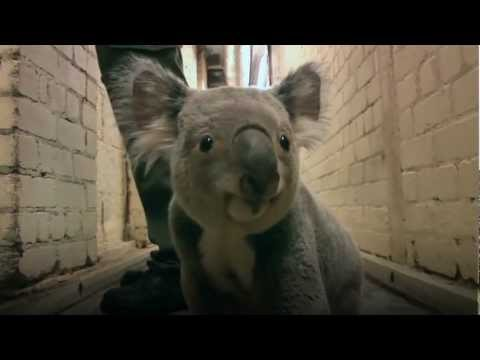 Koala running down the hall