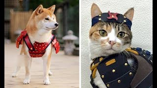 Cutest Puppies & Kittens Doing Funny Things - Cute Animals Vine Videos 2019