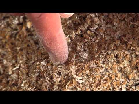 Wheat into Flour