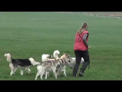 Erziehung Im Rudel - Gabi Lames Und Ihre Huskies