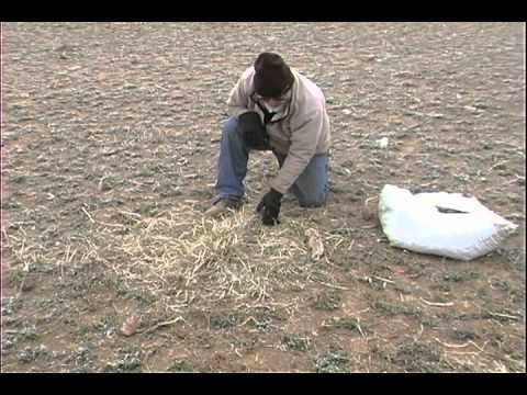 Fox Trapping - Hay Set