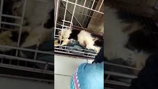 Sedih di tinggal si Molly, kucing kesayangan nafeeza