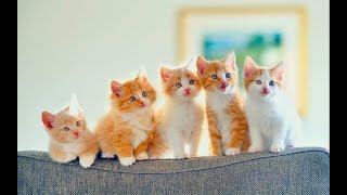 Meo meo meo - Rửa mặt như mèo - Vì sao con mèo rửa mặt - Nhạc thiếu nhi sôi động