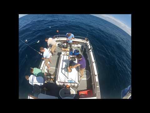 Blue shark fishing in cornwall
