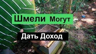 пчеловодство для начинающих -№104 Шмели Дают Доллары.Пасека