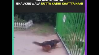 funny dog fight ! as you like