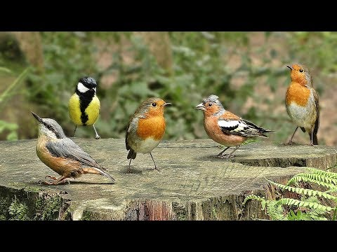 Videos for Cats to Watch : Birds in Birdville - ONE HOUR