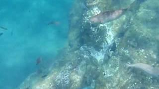 Snorkeling Puerto del Carmen, Lanzarote