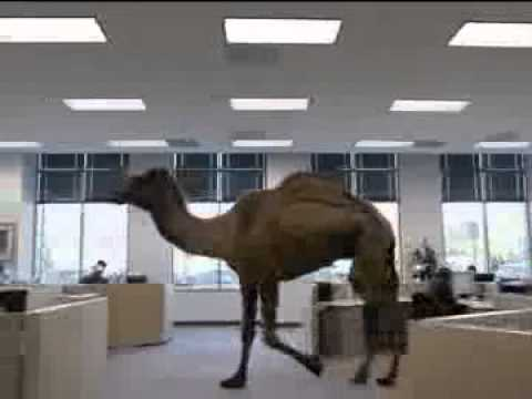Hump Day Camel Geico Gif Geico Hump Day Camel Movie