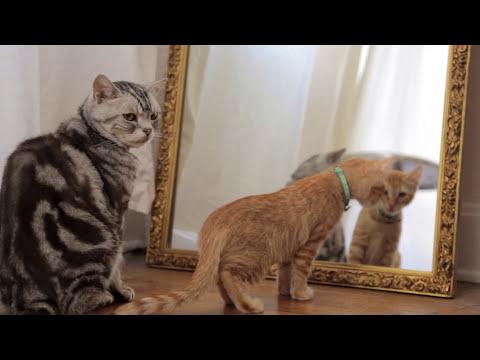 Dear Kitten: Regarding The Dog