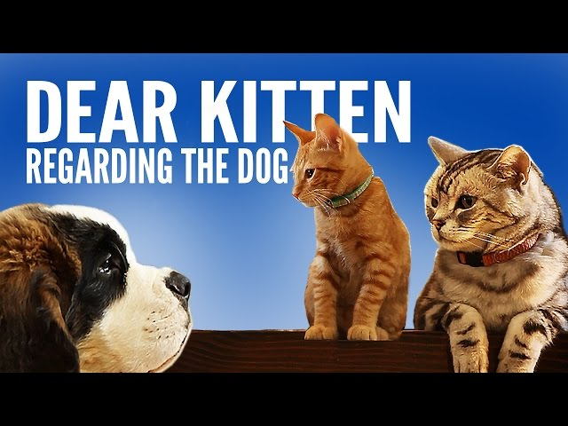 Dear Kitten Regarding The Dog